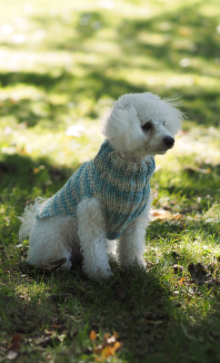 Knitted sweater for dogs Novita Nalle and Nalle Taika or Nalle Garden
