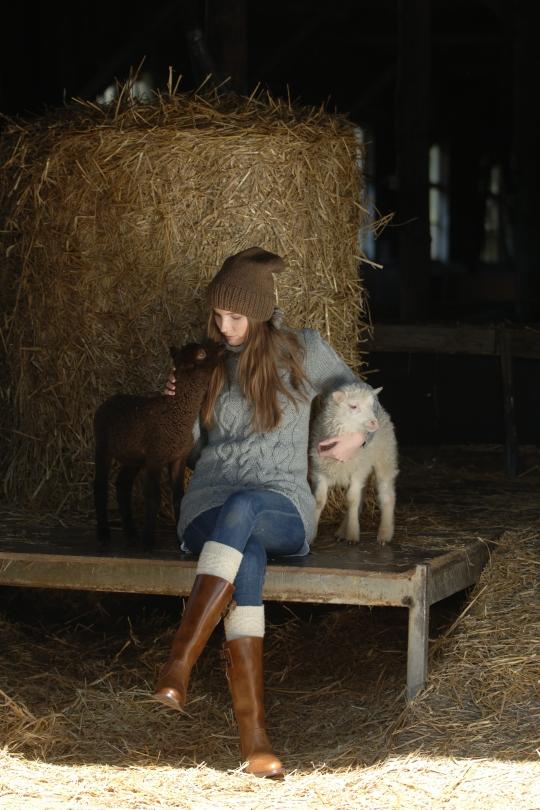 Wool sheep welfare