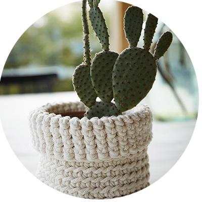 kaktus_pallo